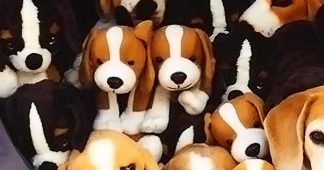 ビーグルどーれだ? 大量の人形にまぎれている犬を探し出せ!