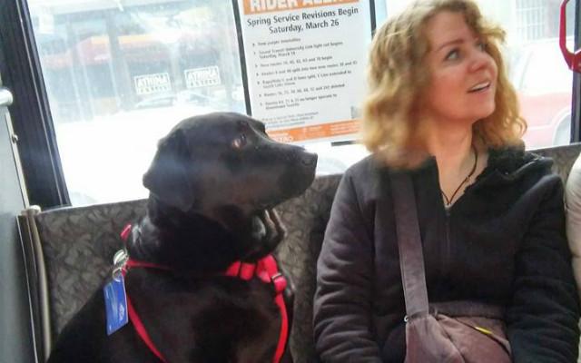 「お散歩行ってきまーす」自分だけバスに乗り、ドッグパークへ出かけるワンコ