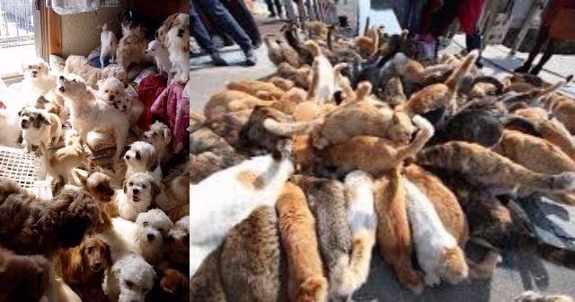【愕然】ベジタリアン俺『動物がコロされて酷く感じないのか?』2ch「じゃあお前、明日保健所いって全動物保護してこいよ」→結果・・・・・・・・