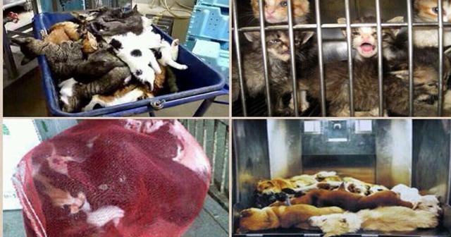 【残酷】ストップ!ただ可愛いだけではダメ。動物を飼う前に考えて、1日350頭、毎年13万匹の犬や猫たちが犠牲になっている真実