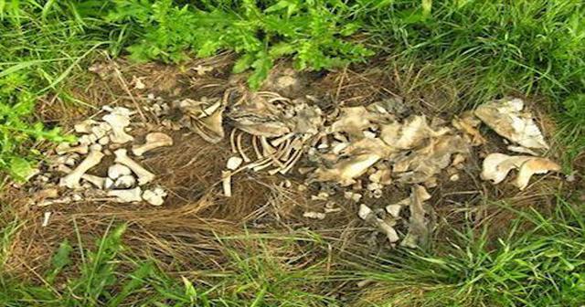 【閲覧注意※】タヒ後に起きること。ウジ虫が身体の60%を食い尽くす?(画像あり)