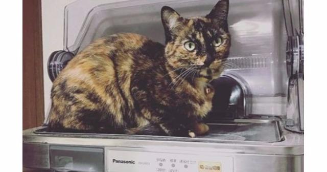 山善の食器乾燥機がある業界で大人気! 誰も食器を乾かさないアマゾンのレビューがおかしなことになってるwww