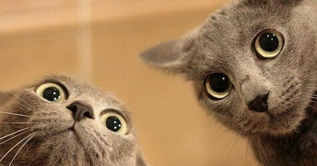 【驚愕】あなたはこの事実を知っていても野良猫を拾って帰りますか?猫の一生にかかる必要経費は最低でも〇〇万円