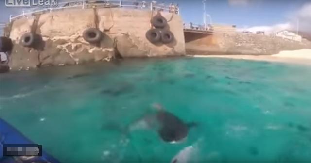 【閲覧注意】カヤックに乗った男性がサメの群れに襲われる映像が怖すぎ!!!!!