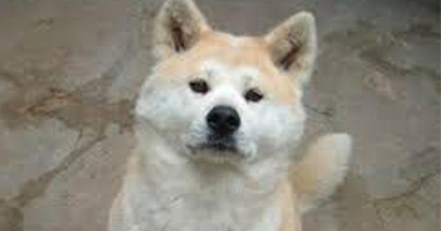 【トルコ版忠犬ハチ公】亡き飼い主を惜しむ愛犬の忠誠心が泣けると話題に。
