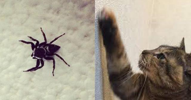 【アレの正体】よく家で見かける「黒くて小さいクモ」の名前が実はメチャクチャかっこいい