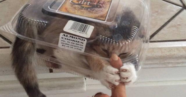 【本当は怖い】飼い猫があなたの命を狙っている18の行動とは?