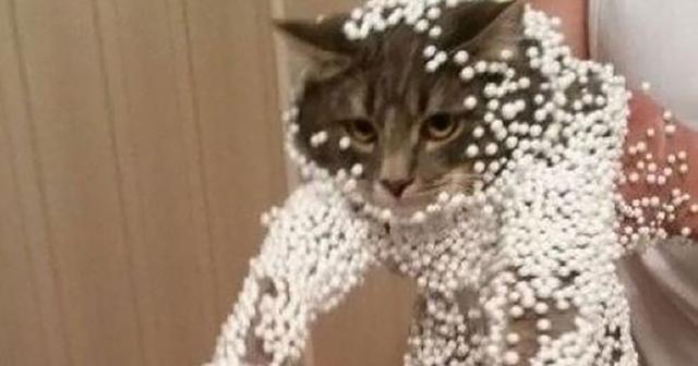 【閲覧注意】猫砂の悲劇。猫砂をトイレに流すと一階の住民がこうなります・・・