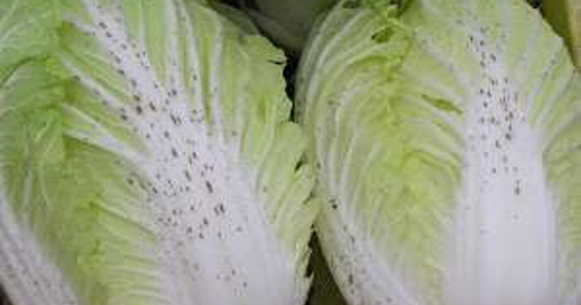 【野菜トリビア】そうだったのか!白菜の黒いブツブツの正体が判明!実はこれ・・