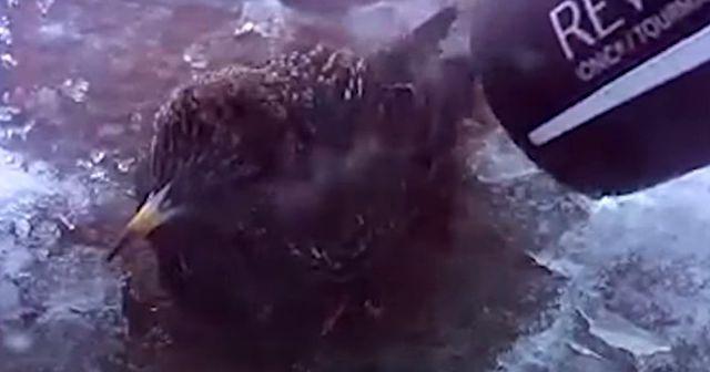 【心温まる話】「絶対助けてあげるから!」雪の中、凍り付いた小鳥をドライヤーで助ける女性 (動画あり)