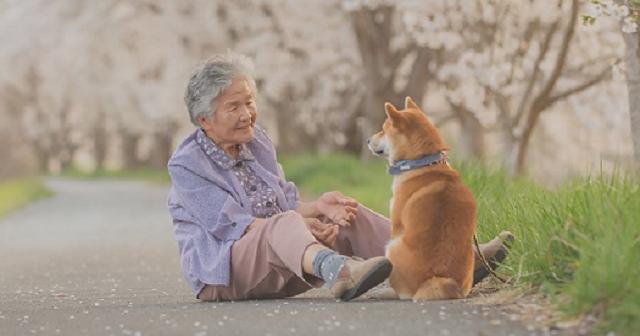 【涙が止まらない】おばあちゃんと柴犬が写った儚くも美しい愛情いっぱいの写真に13万超のいいね!