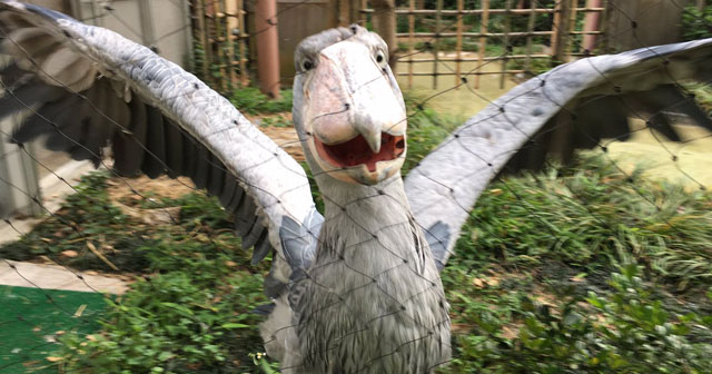 【可愛すぎ!】動物園の公式アカウントが癒される!