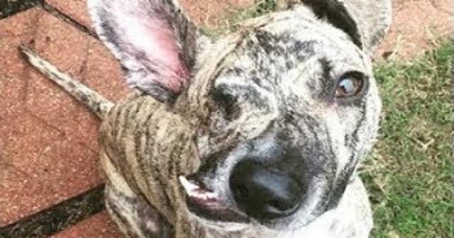 【感涙】繰り返し殴られたせいで、エサも食べられないほど顔が変形した犬が、ついに安楽死となった時に…