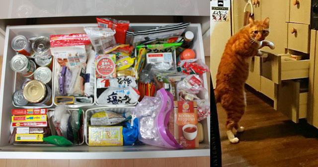 【GJ!】義両親と同居中のうちの台所から、いつも買い置きしている食材を持ち帰るコトメに、ついにキレてしまった。私「自分でお金出してスーパーで買いなさいよ! 図々しい!最悪だな!!!」