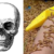 【知っているようで知らなかった】ウジ虫が身体の60%を食い尽くす?死後、人間に起きること【まとめ】
